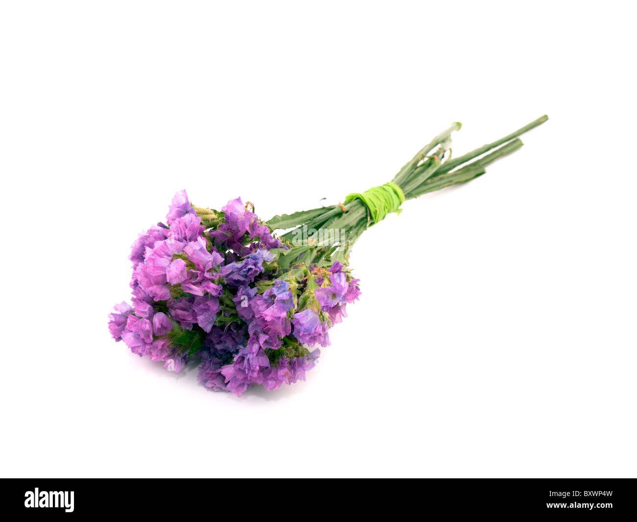 Statice flower stock photos statice flower stock images alamy small bouquet of pink statice flowers on white background stock image mightylinksfo
