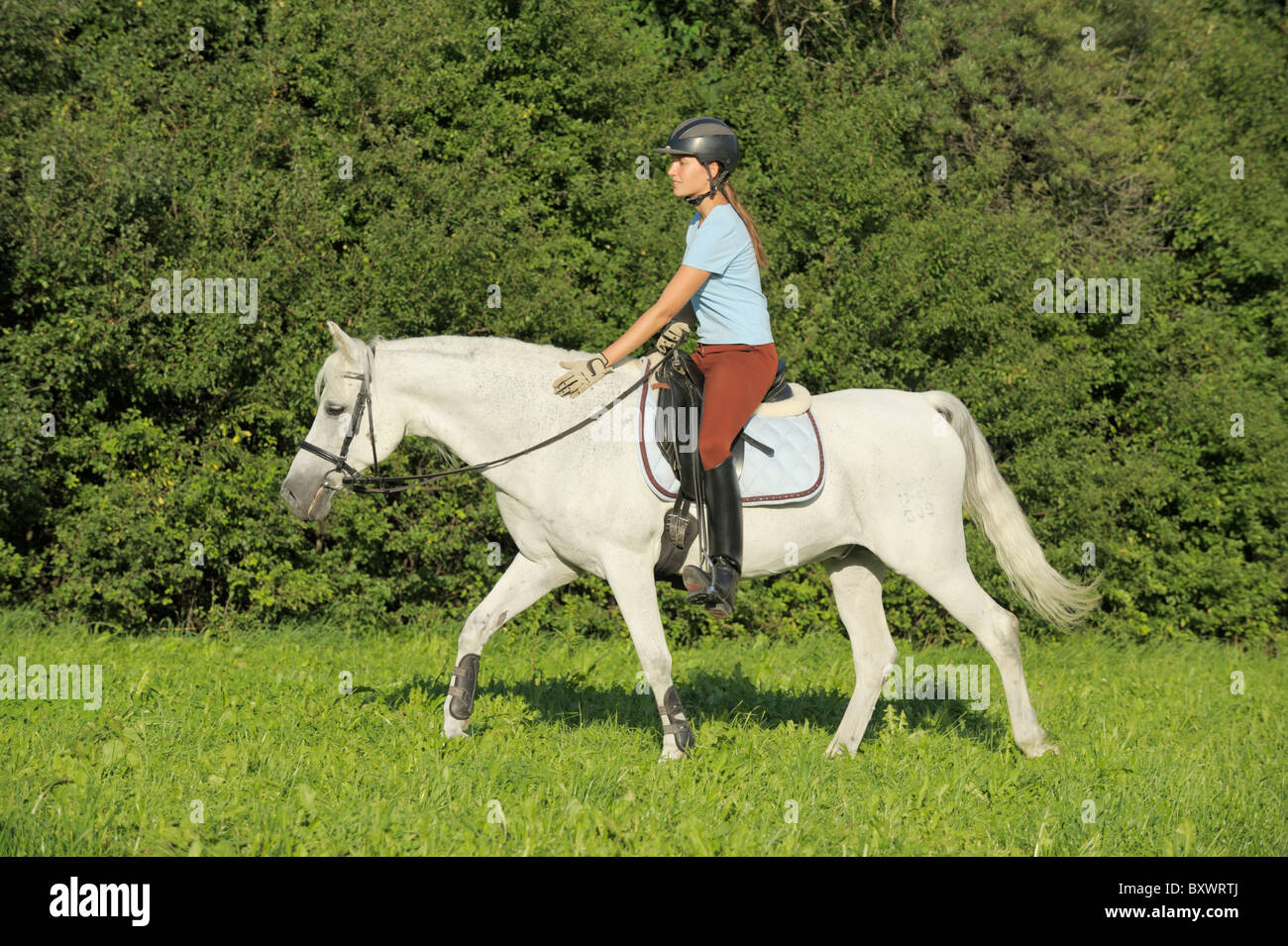 Young rider on back of a German pony walking with long reins - Stock Image