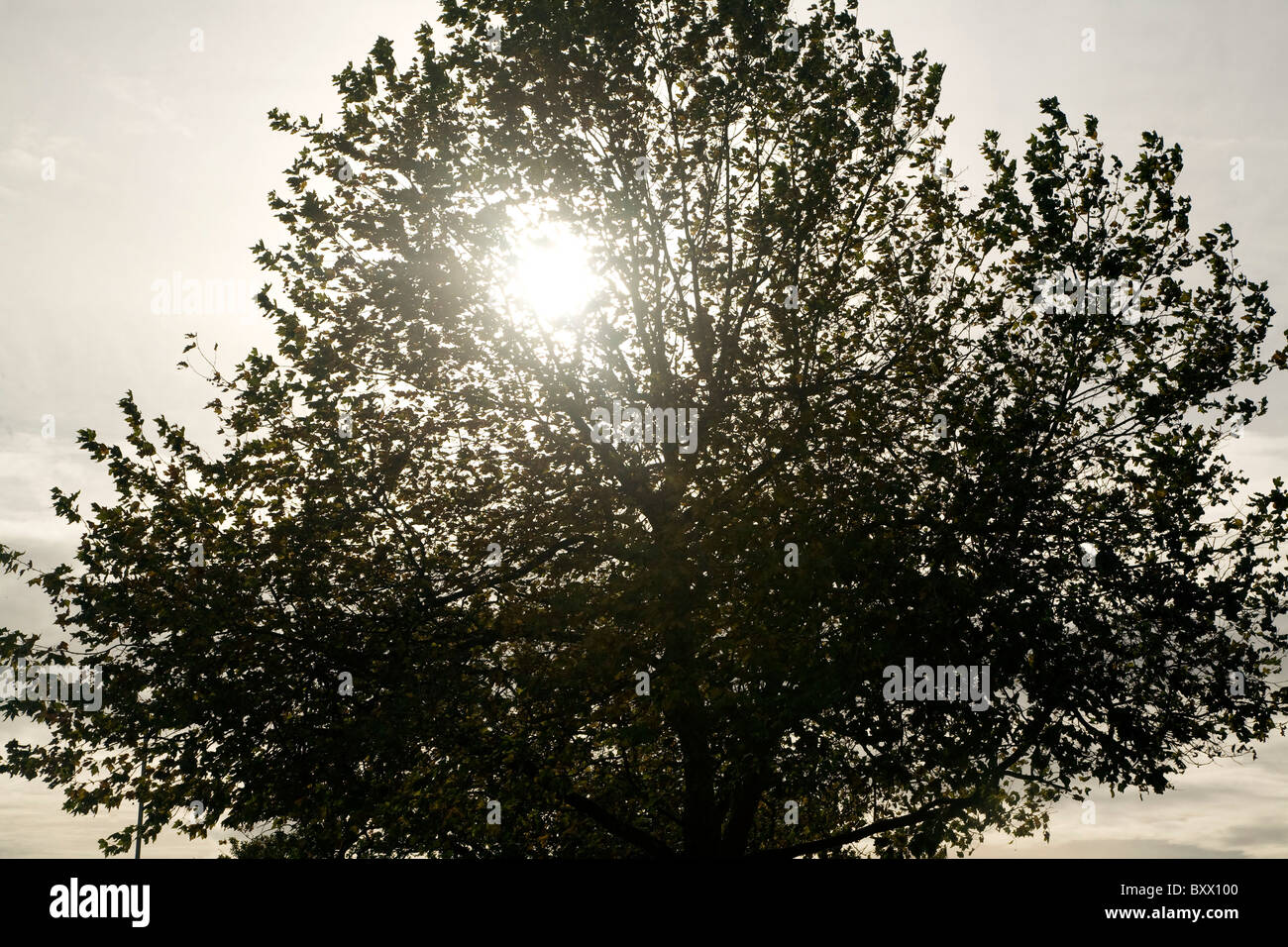 Winter sun shines through tree grey sky - Stock Image