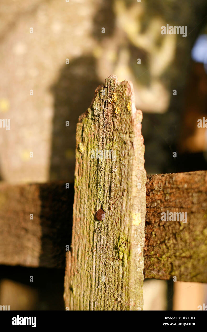 A well seasoned fence post - Stock Image