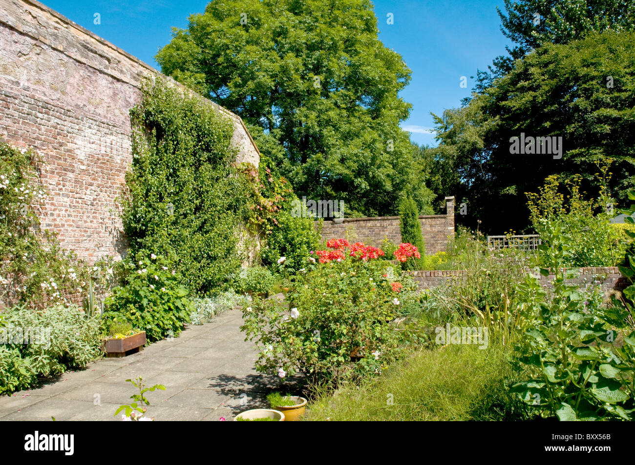 Flowers in the walled garden Priorwood Melrose Scottish Borders Scotland - Stock Image