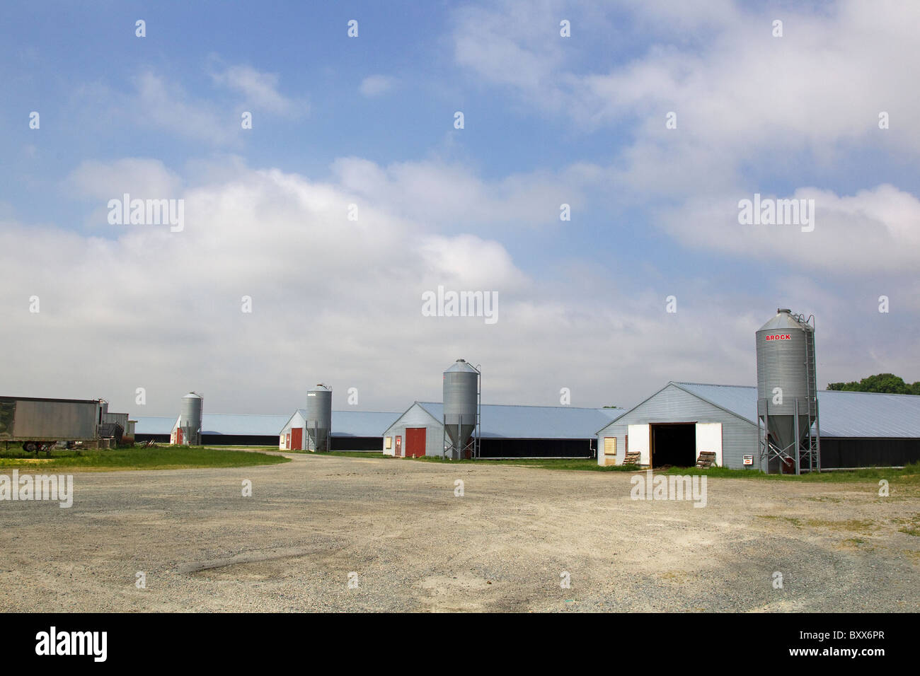 Poultry barns, chicken houses, on factory farm in Temperanceville, Virginia, USA - Stock Image