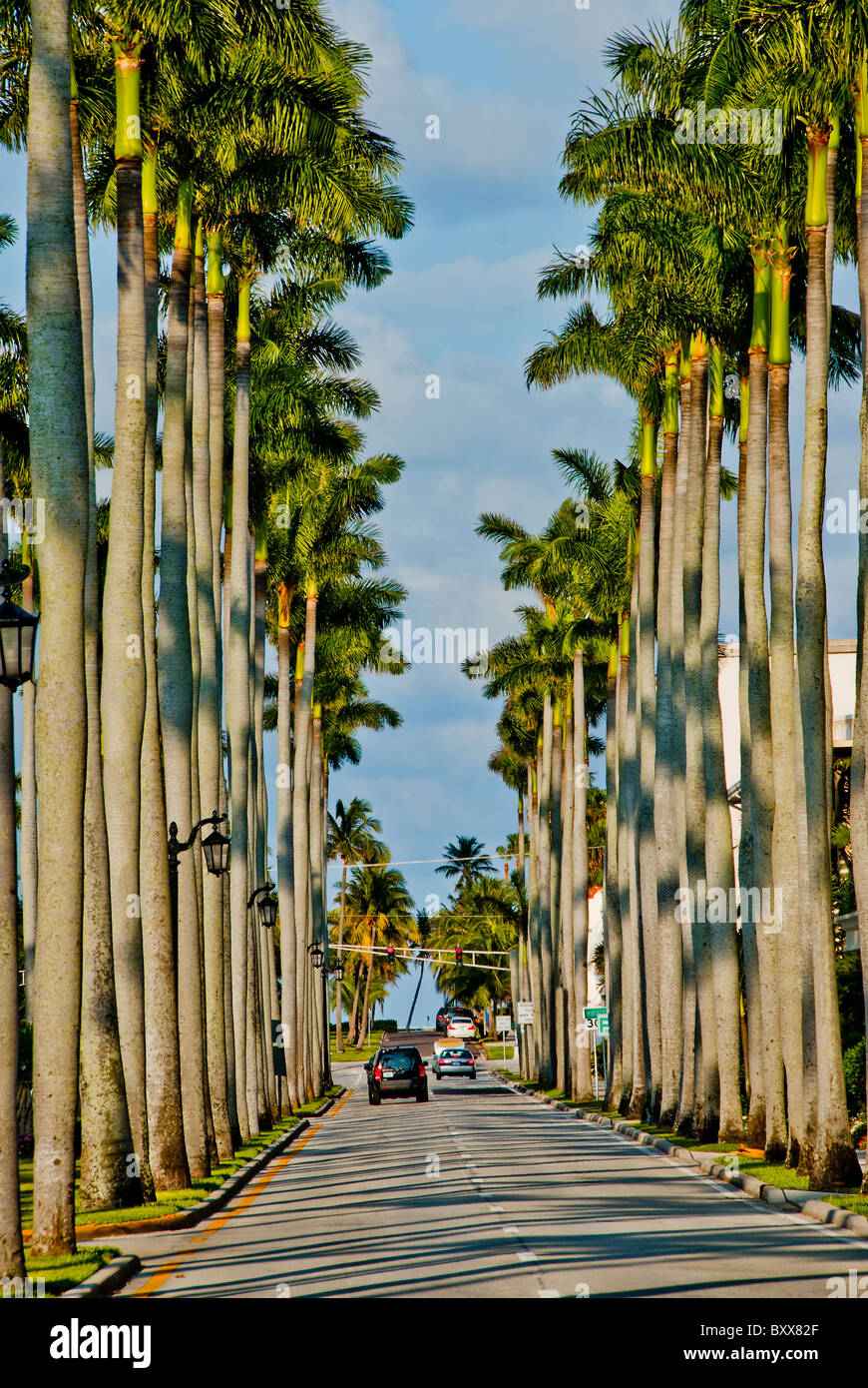 Royal Palms lining both sides of 'Royal Palm Way', a street in Palm Beach, Florida, USA - Stock Image