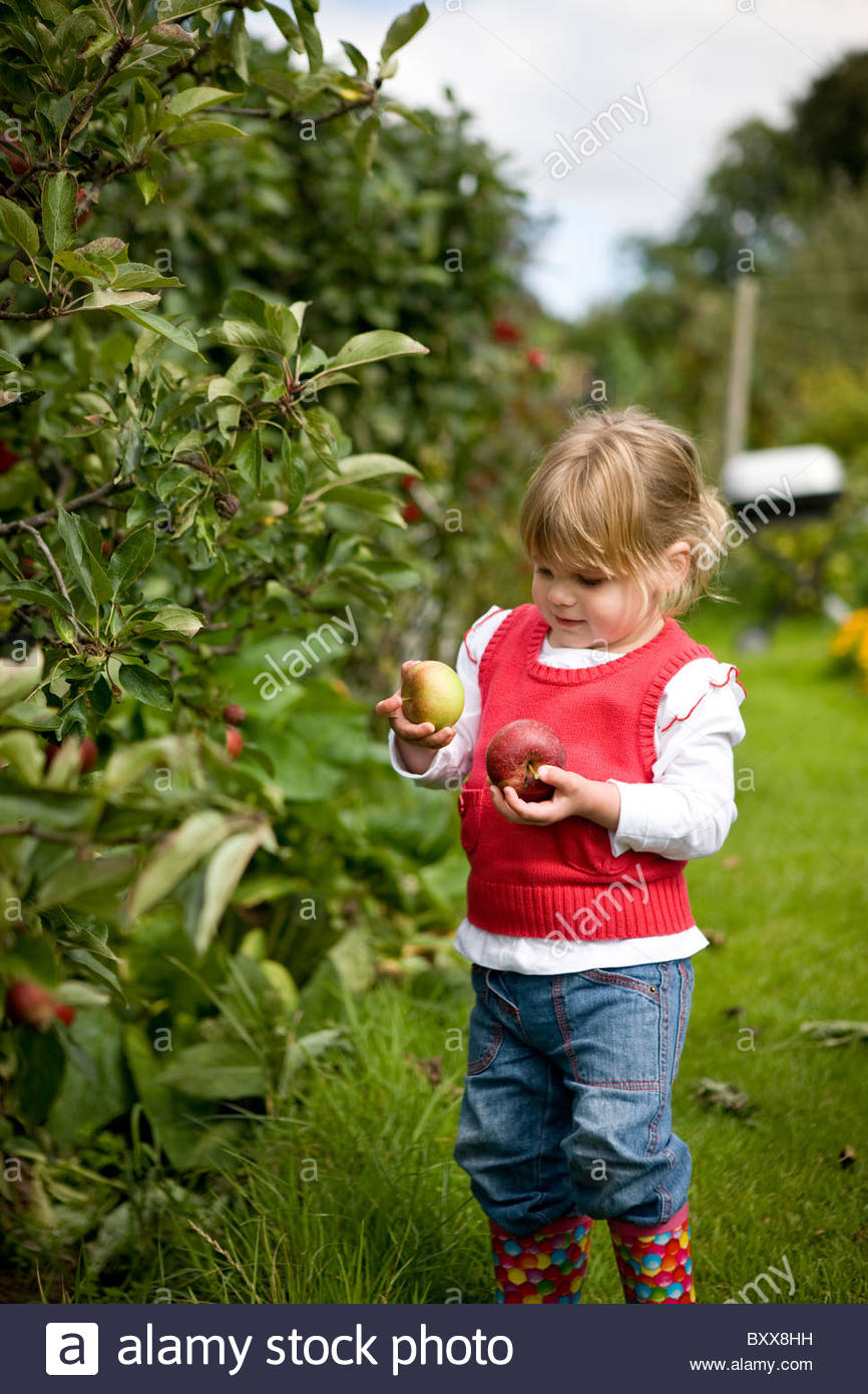 A young girl picking apples - Stock Image
