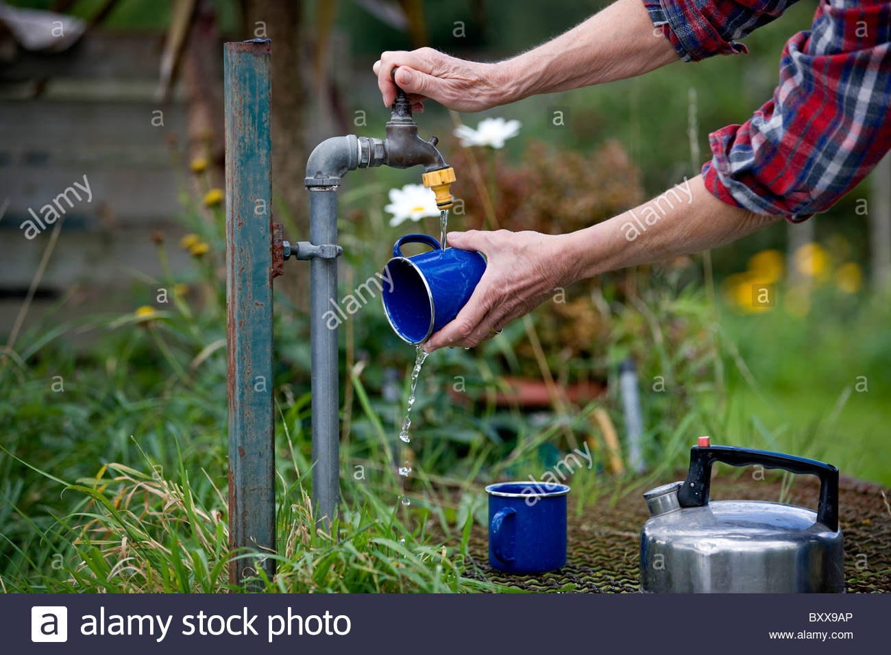 A senior woman washing cups on an allotment - Stock Image