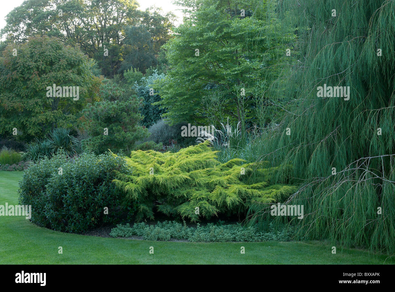 Evergreen trees and shrubs at rhs rosemoor devon uk - Stock Image