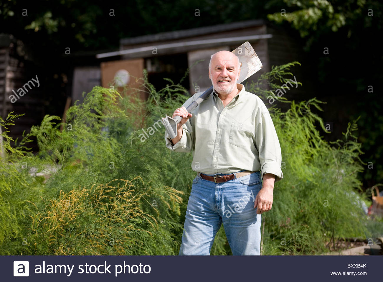 A senior man holding a spade on an allotment - Stock Image