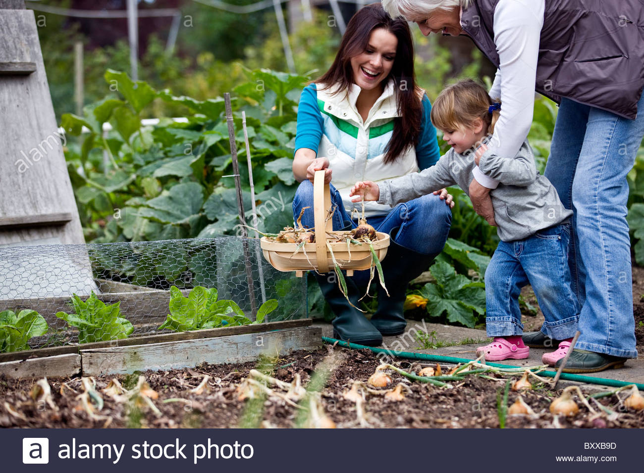 A family pulling up onions on an allotment - Stock Image