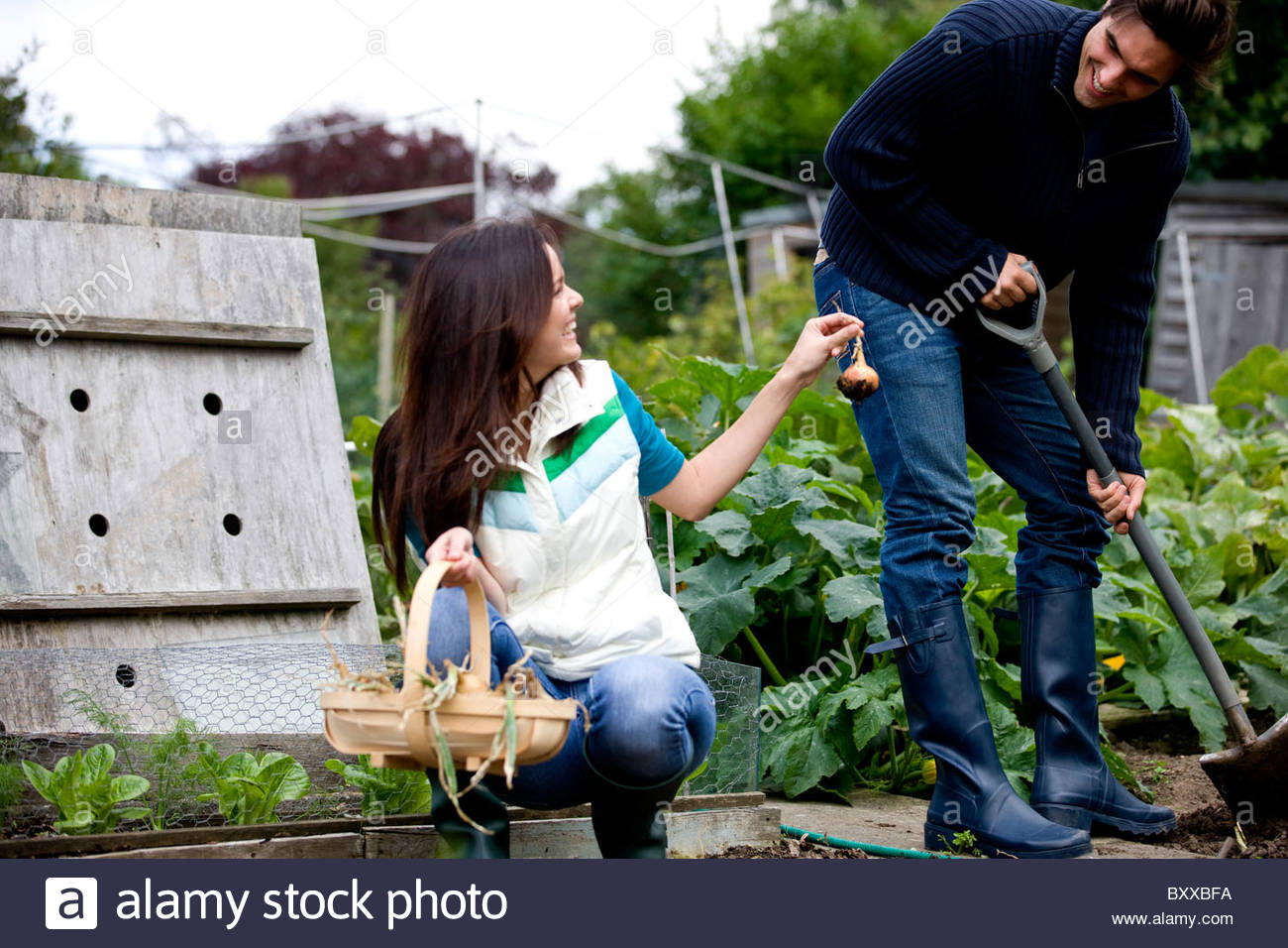 A young couple working on an allotment together - Stock Image