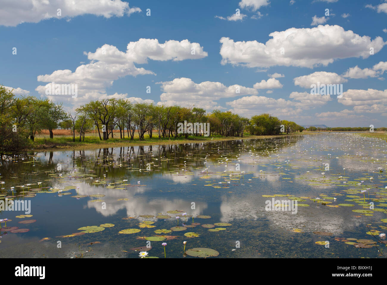 Parry Lagoons between Wyndham and Kununurra, Kimberley, Western Australia - Stock Image