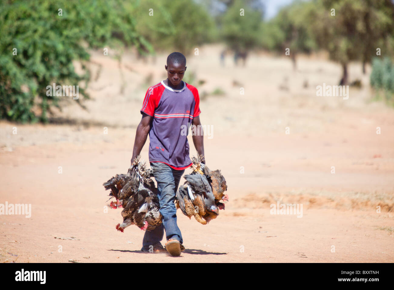 A man brings poultry to the village market of Bourro in northern Burkina Faso. Stock Photo