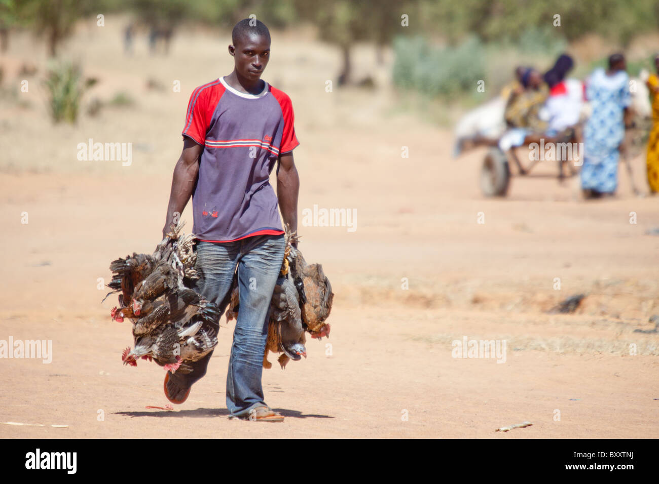 A man brings poultry to the village market of Bourro in northern Burkina Faso. - Stock Image