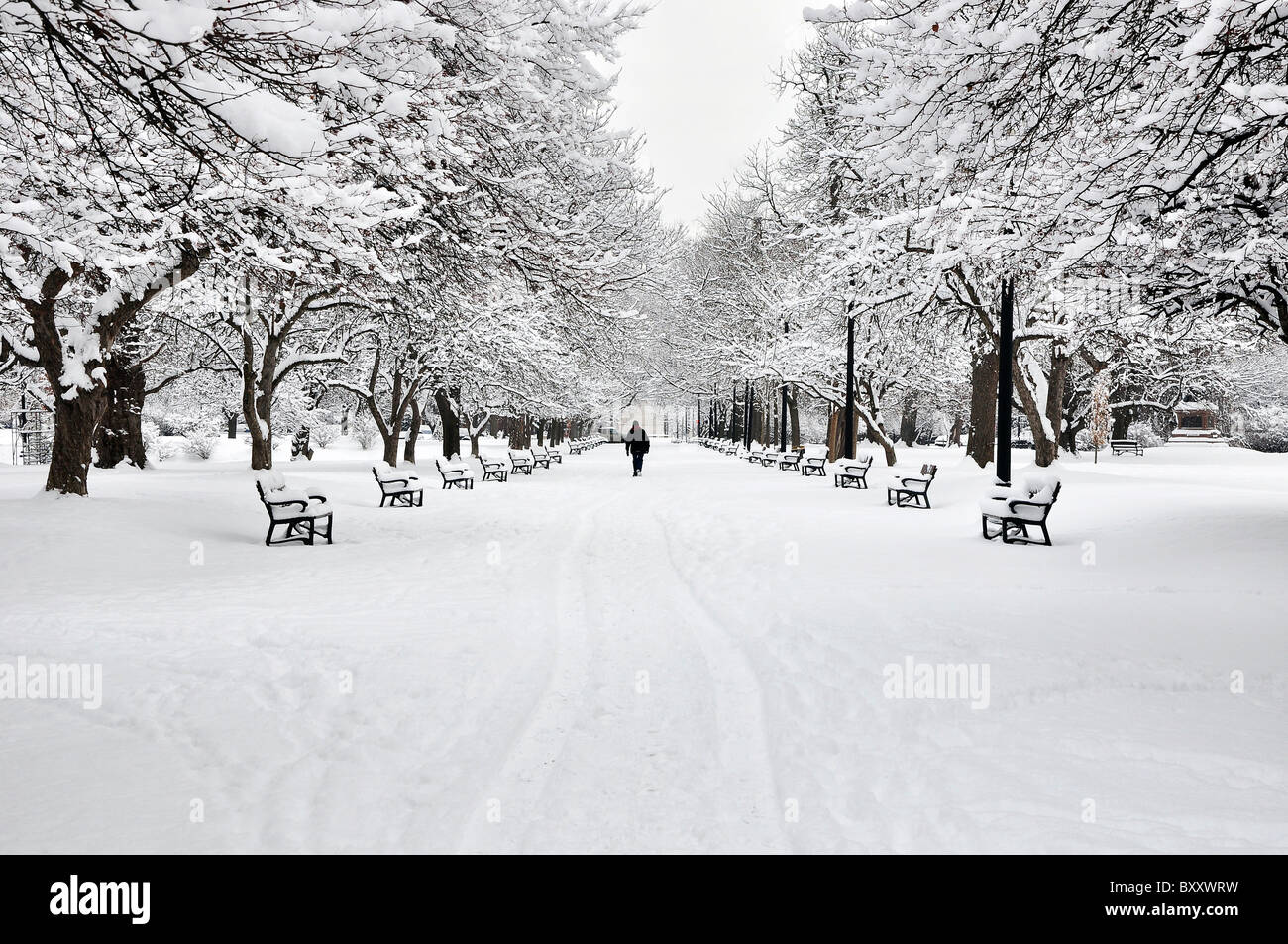 A man walking in a winter morning after snow storm in Albany Washington Park, New York. - Stock Image