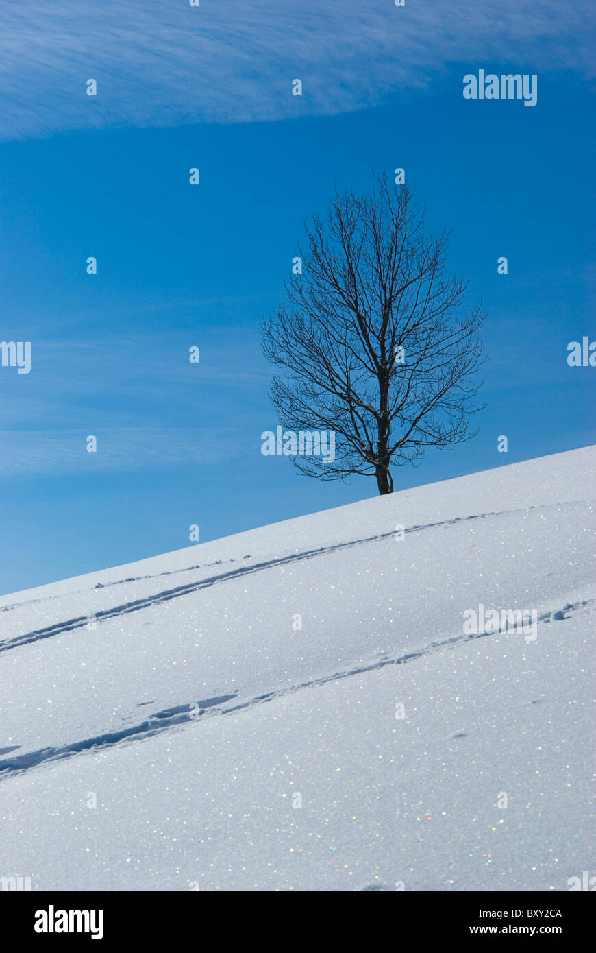 Winterlandschaft - Winter landscape - Stock Image