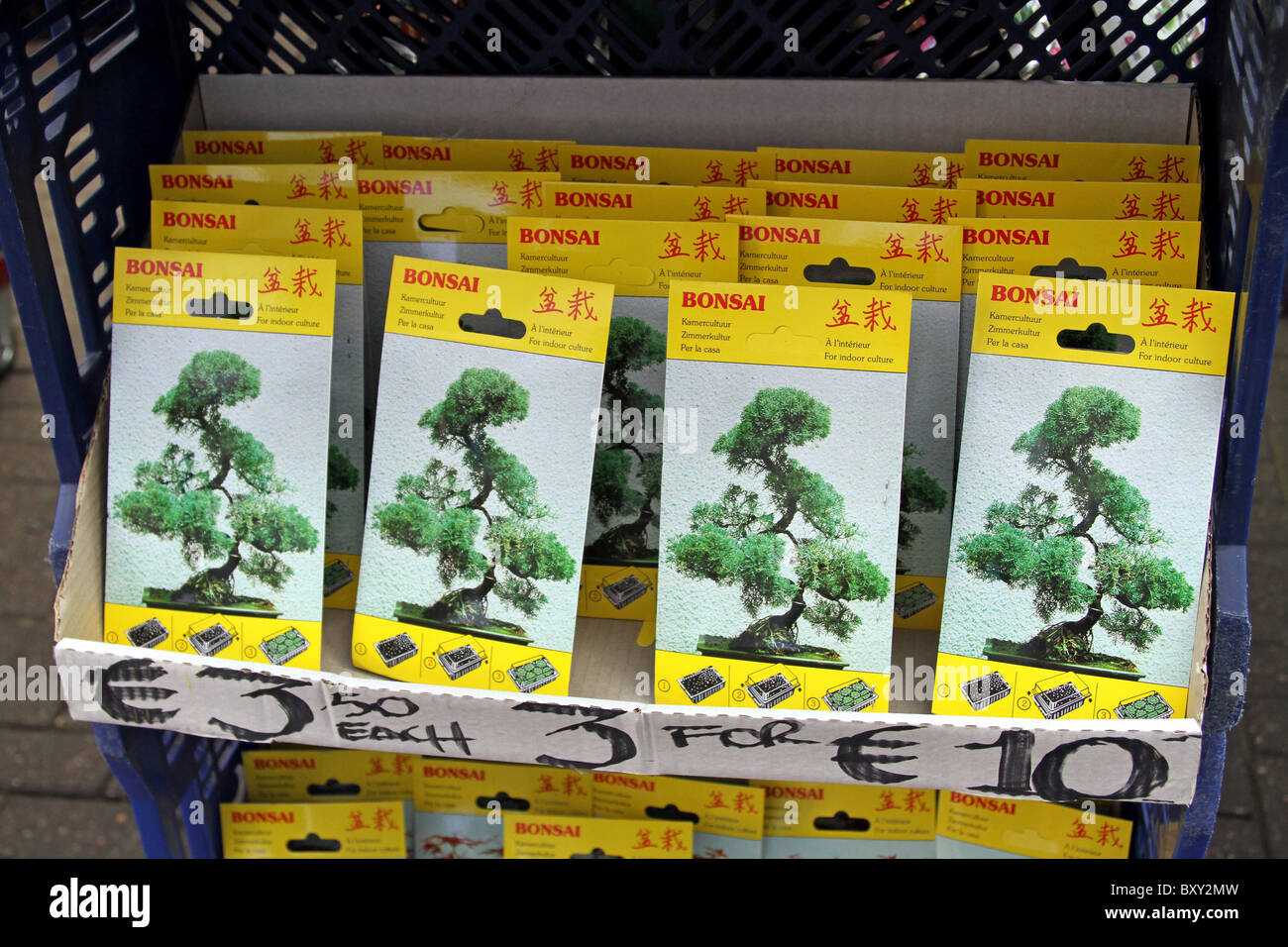Bonsai Tree Seeds For Sale In Amsterdam Holland Stock Photo Alamy