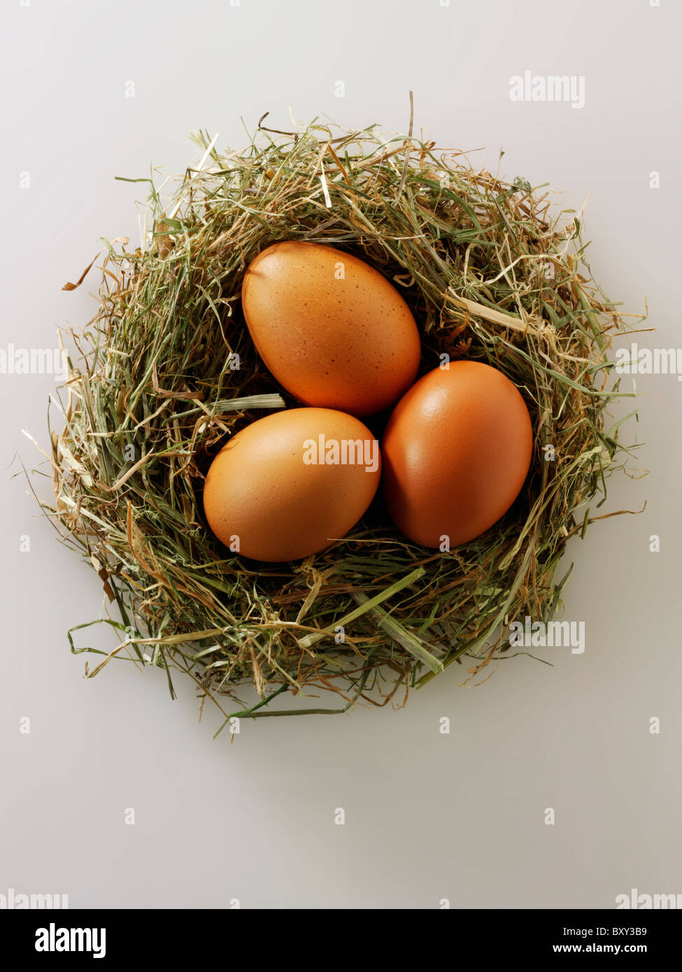 Fresh Burford Brown free range organic Eggs in a nest - Stock Image