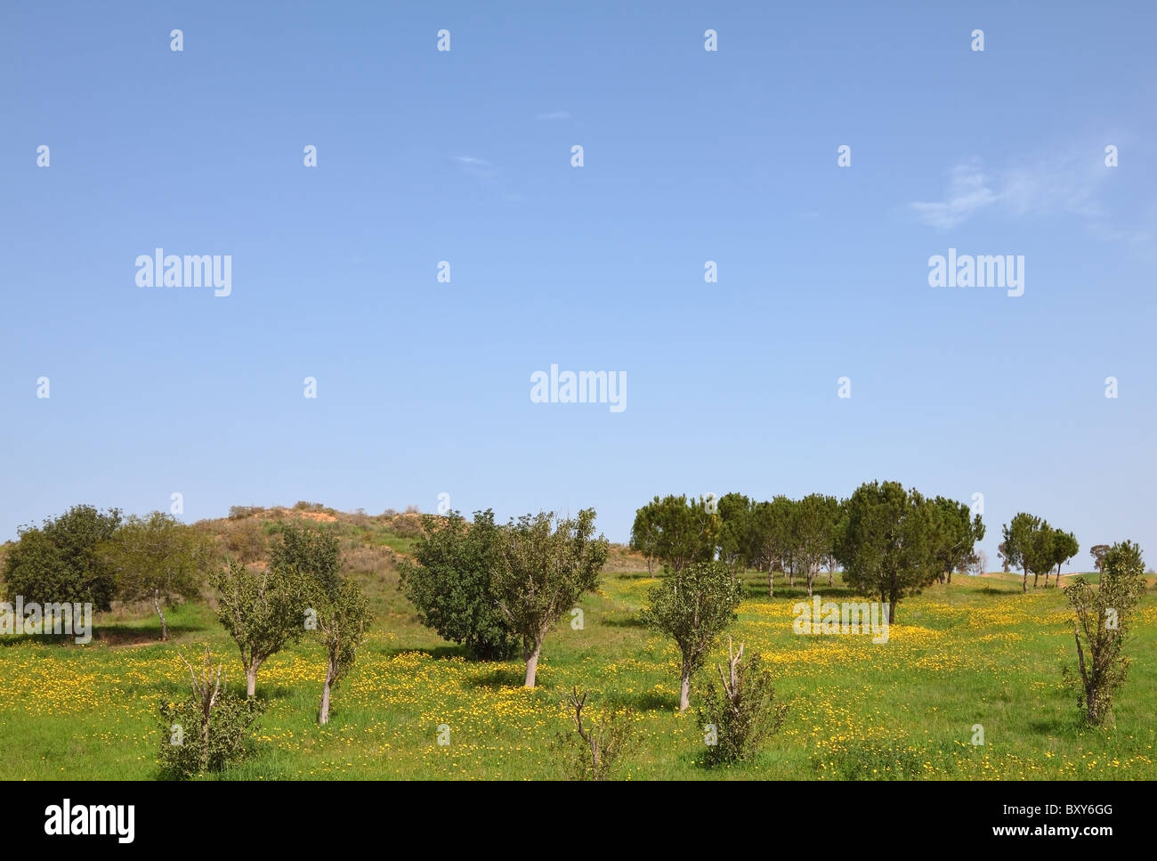 Blossoming rural fields in the south of Israel. Warm February - Stock Image