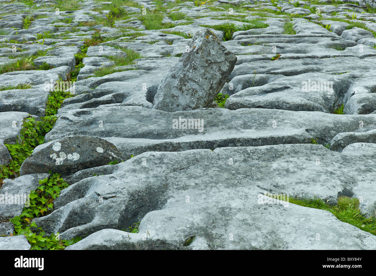 Limestone pavement glaciated karst landscape in The Burren, County Clare, West of Ireland - Stock Image