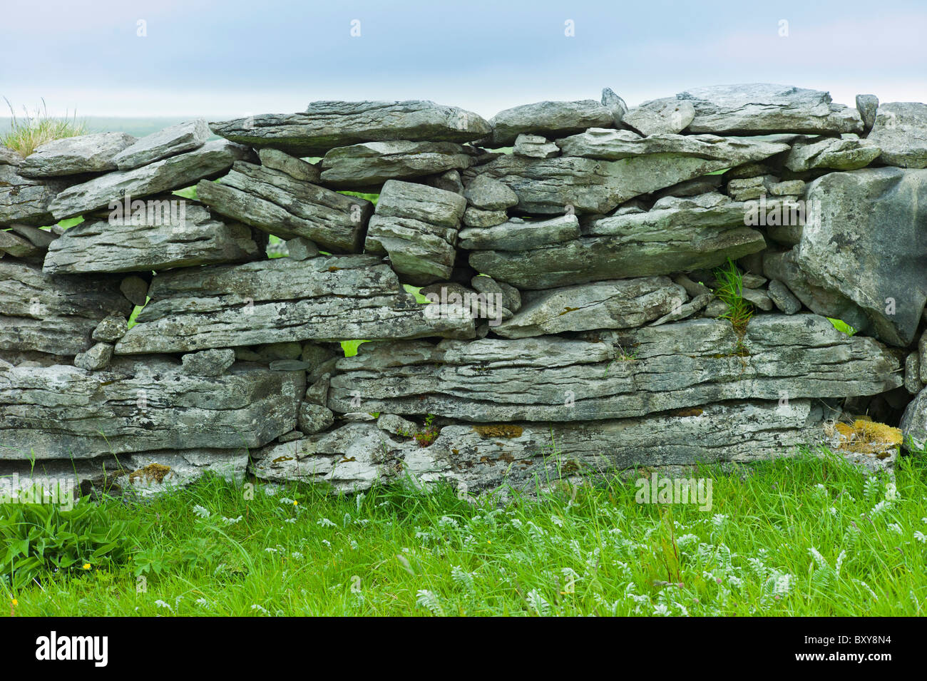 Traditional dry stone wall, stones laid flat, in field in The Burren, County Clare, West of Ireland - Stock Image