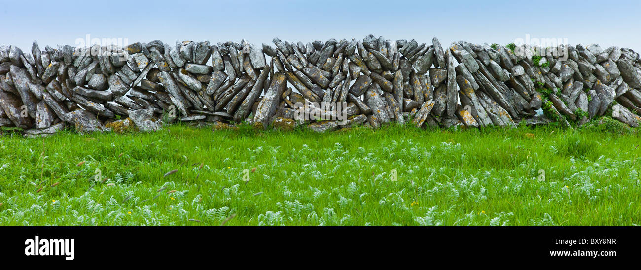 Traditional dry stone wall, vertical sloping stones, in field in The Burren, County Clare, West of Ireland - Stock Image
