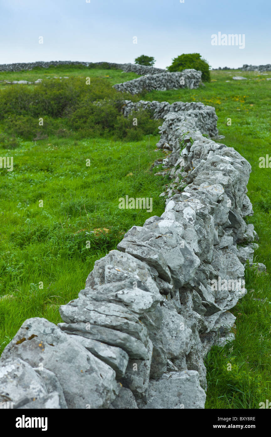 Traditional dry stone wall in meadow in The Burren, County Clare, West of Ireland - Stock Image
