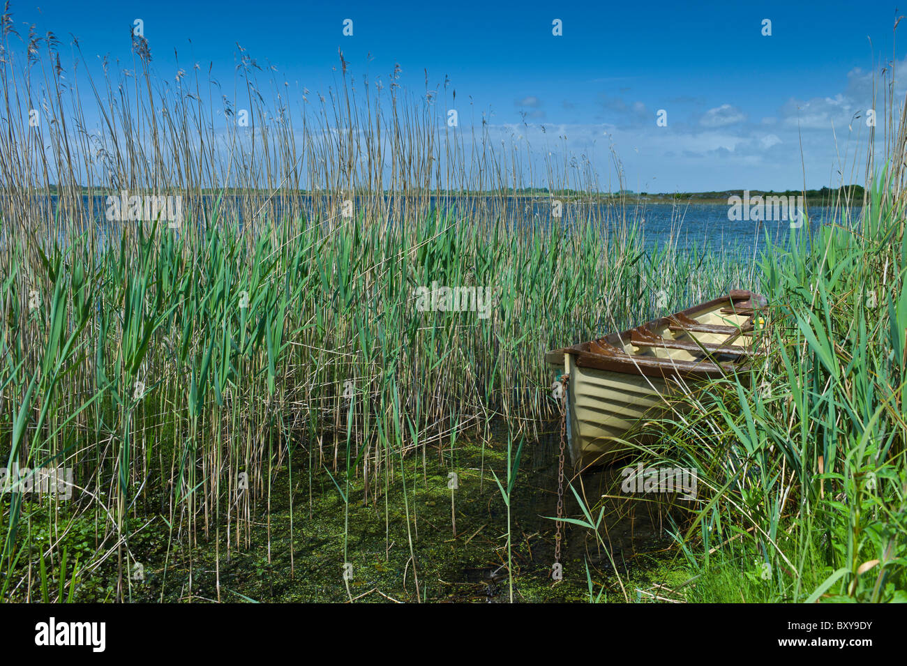 Boat among the reeds at Lough Muckanagh, County Clare, West of Ireland - Stock Image