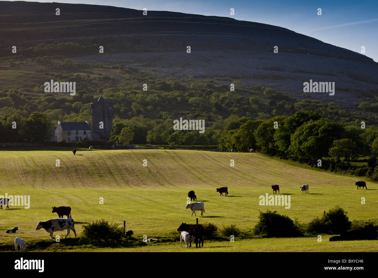 Homestead in shadow of The Burren karst landscape and Newtown Castle, Ballyvaughan, County Clare, West of Ireland - Stock Image