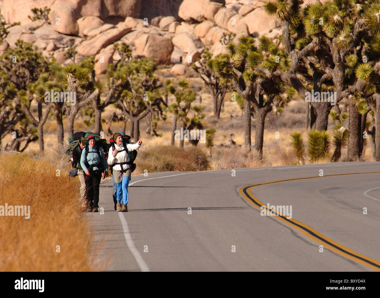 Backpackers on Highway through Joshua Tree Park, Yucca brevifolia, Mojave Desert, California, USA - Stock Image