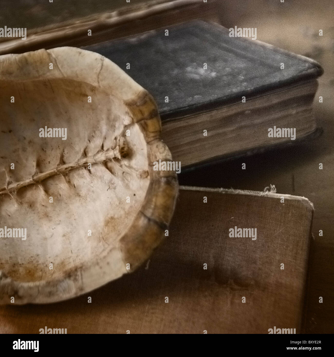 Turtle shell and old books Stock Photo