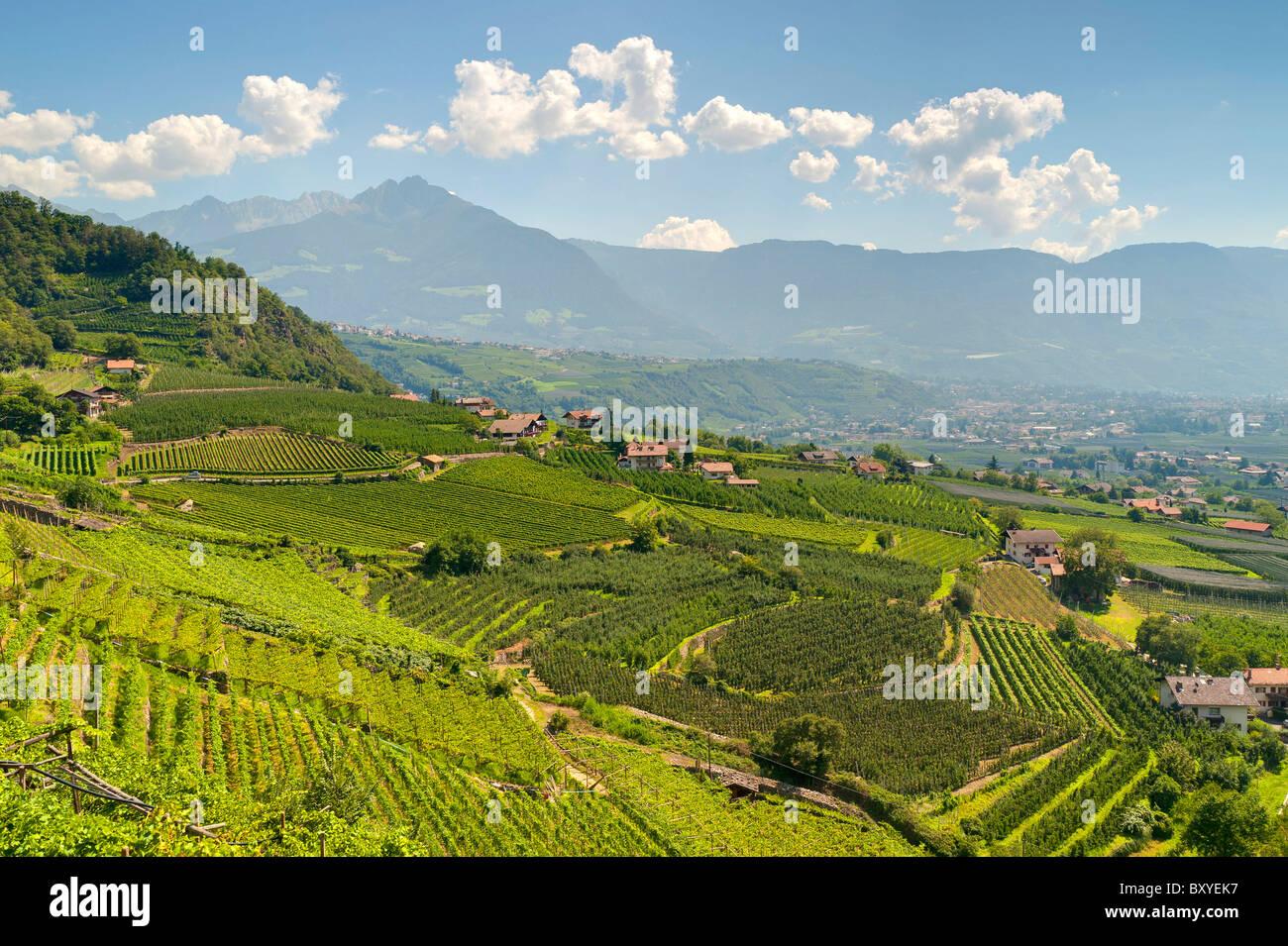 Venosta Valley vineyards Trentino Alto Adige South Tyrol Merano Italy - Stock Image