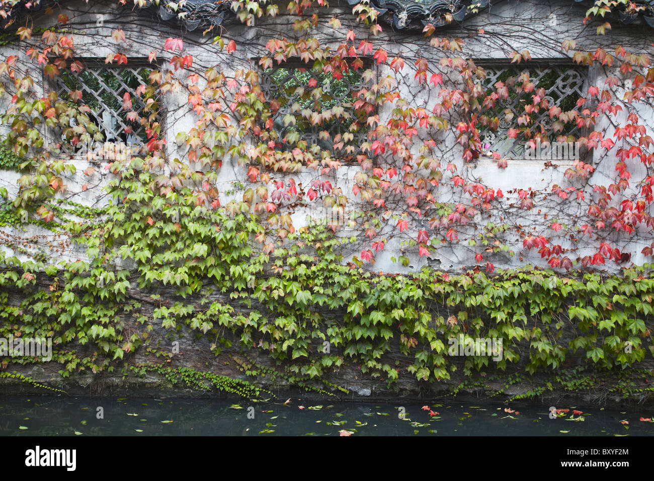 Leaf covered wall in Humble Administrator's Garden (UNESCO World Heritage Site), Suzhou, Jiangsu, China - Stock Image