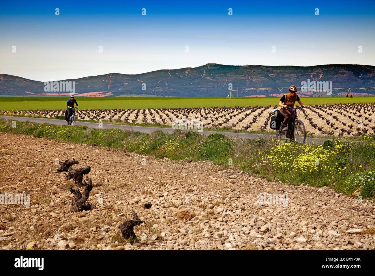 Viñas junto al Parque Nacional de Las Tablas de Daimiel Ciudad Real Castilla La Mancha España Vineyards - Stock Image