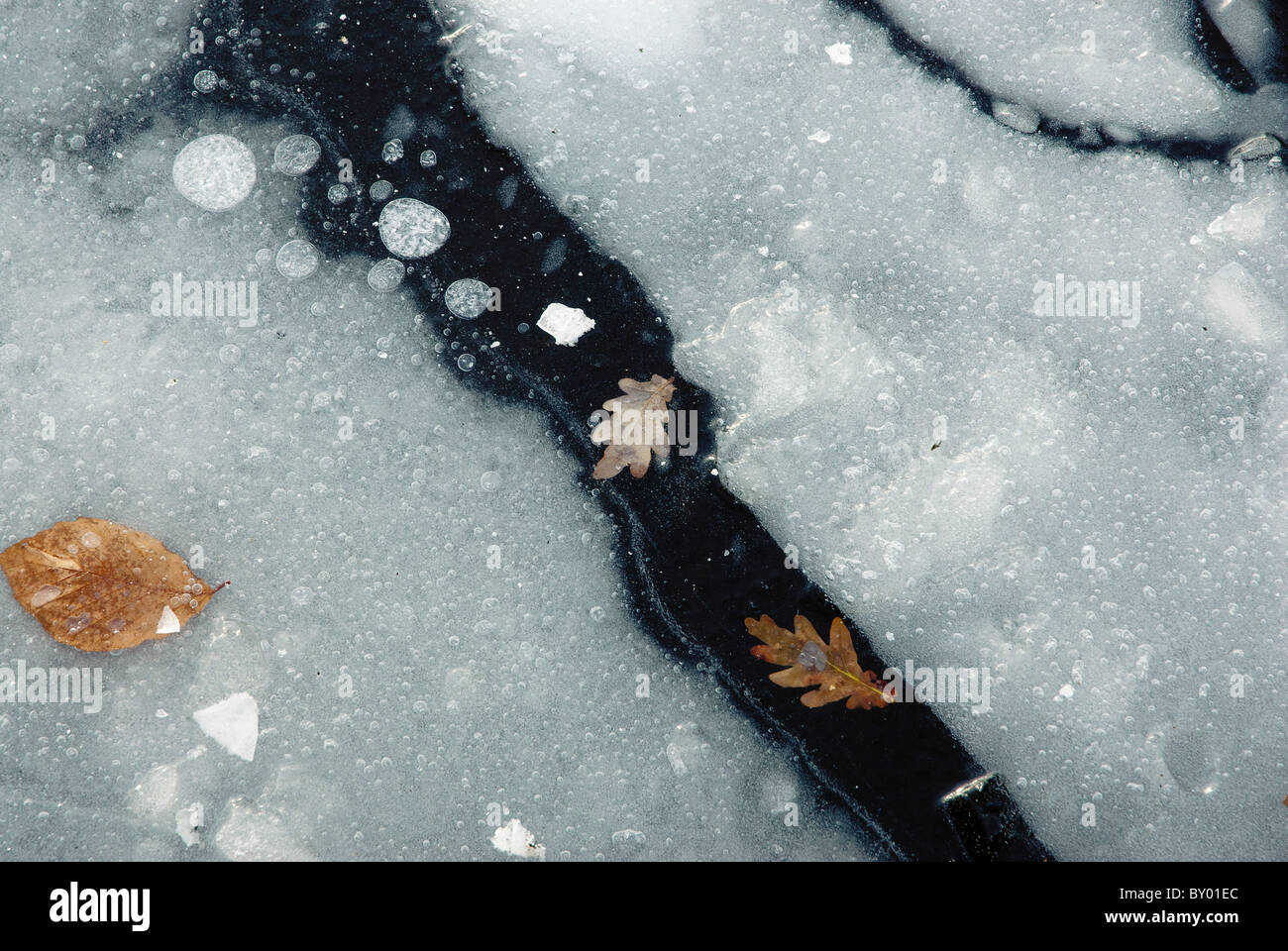 Leaves frozen into iced up up pond in winter Stock Photo