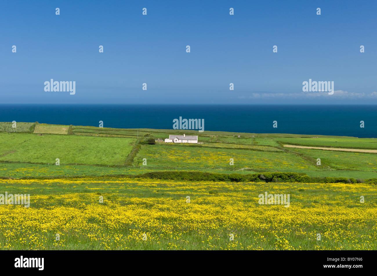 Traditional cottage on the Atlantic coast at Killard, County Clare, West Coast of Ireland - Stock Image