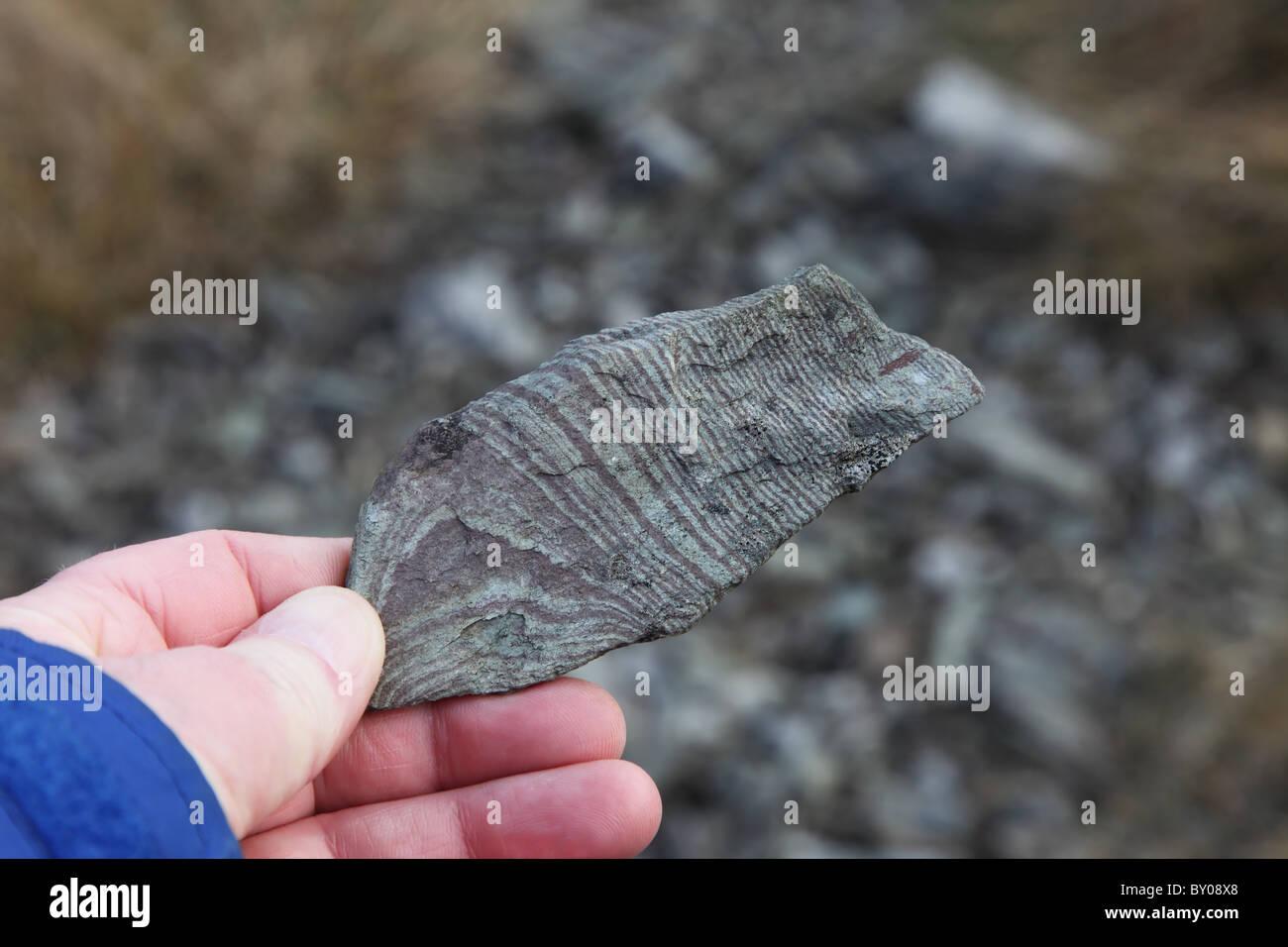 Sample of Rock from Moughton Whetstone Hole Crummackdale Yorkshire Dales - Stock Image