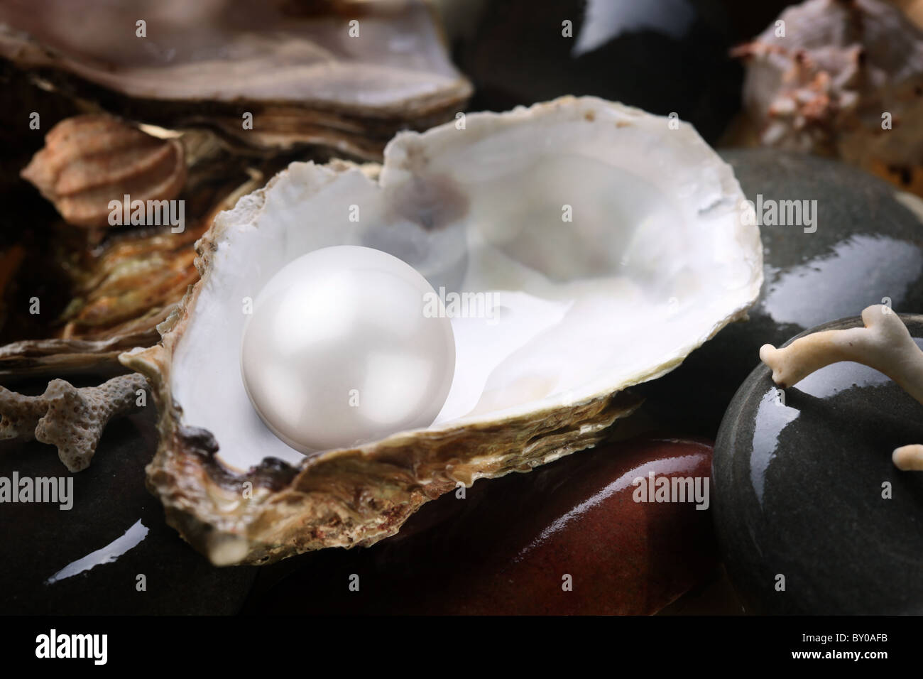 Image of a white pearl in the shell on wet pebbles. - Stock Image