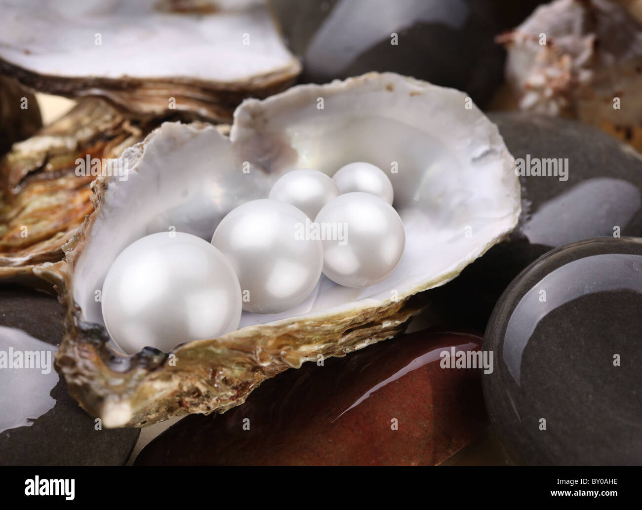 Image placer pearls in a shell on the wet pebbles. - Stock Image