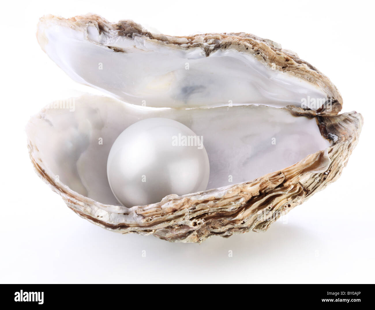 Image of a white pearl in a shell on a white background. - Stock Image