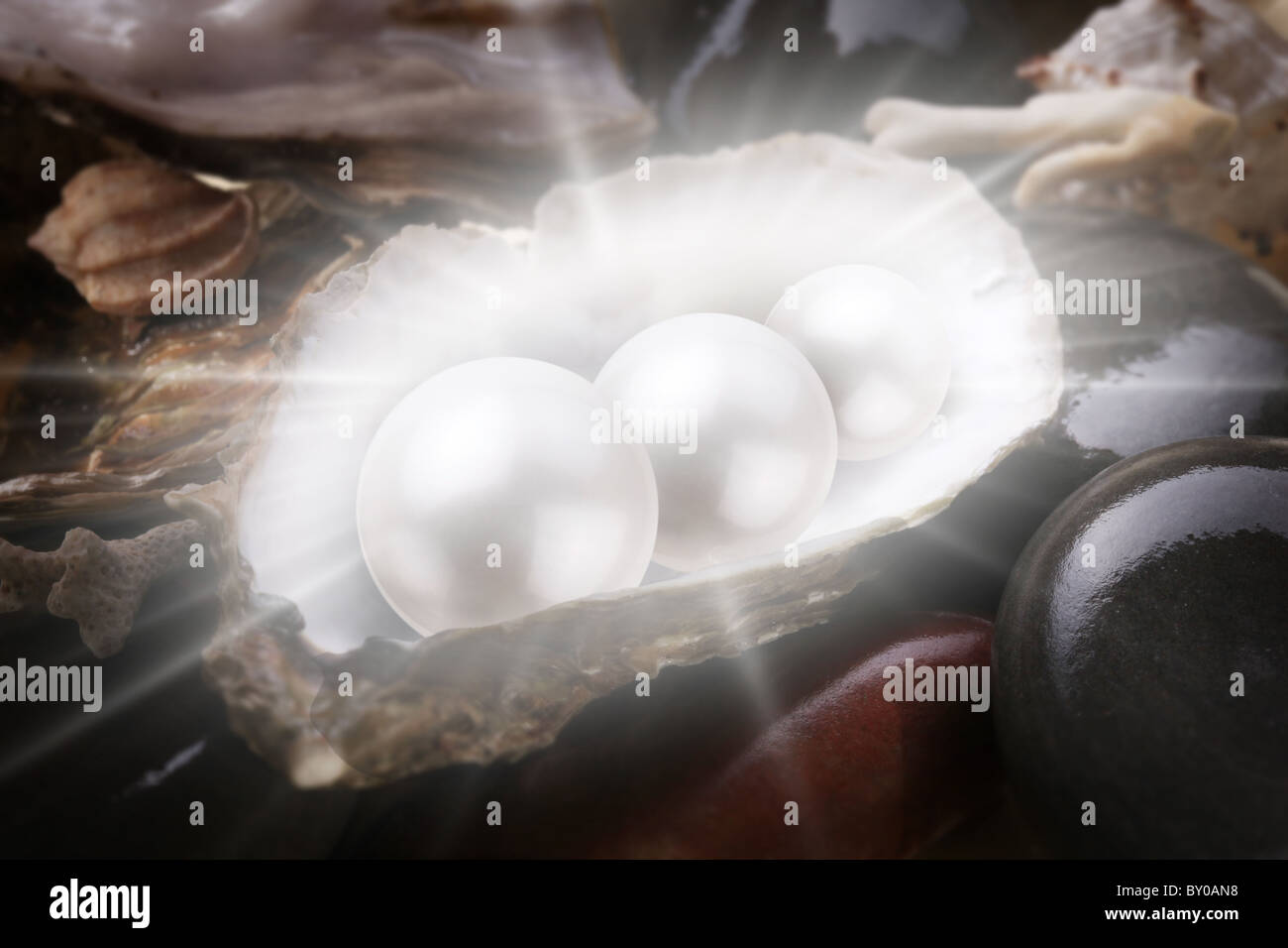 Image of three pearls in the shell on wet pebbles. - Stock Image
