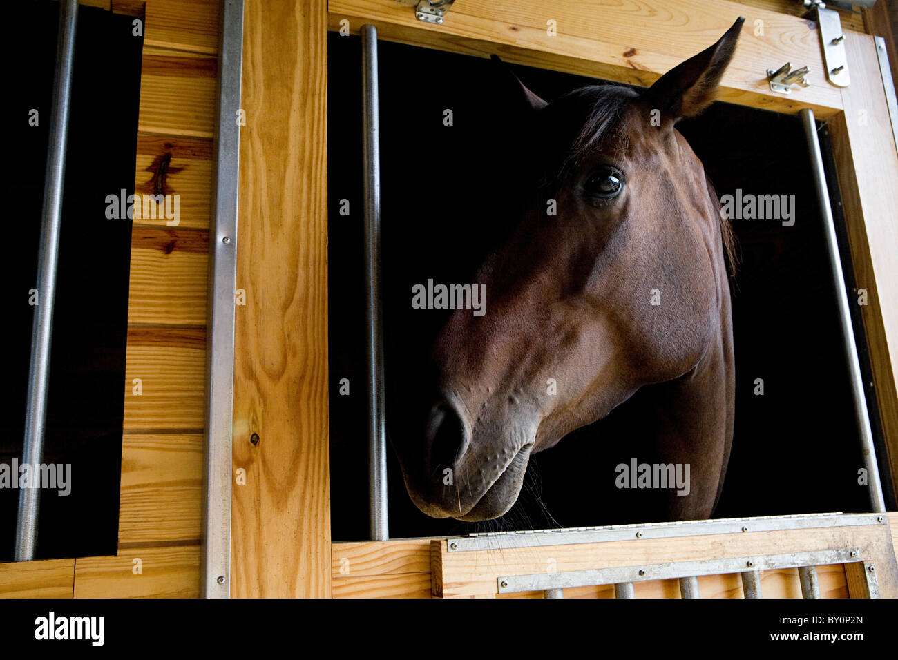 Horse's head and stable - Stock Image