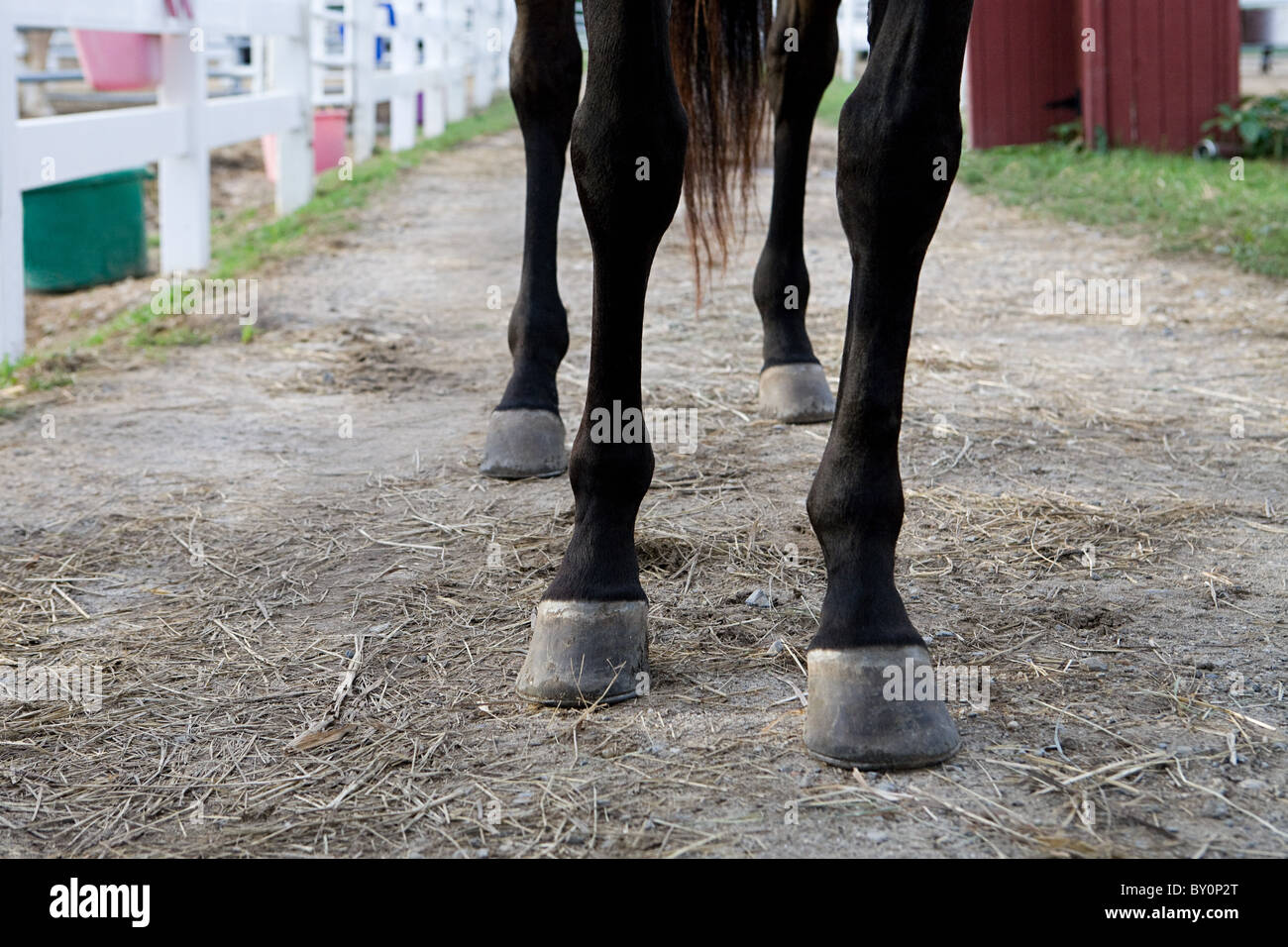 Horse's legs and hooves - Stock Image