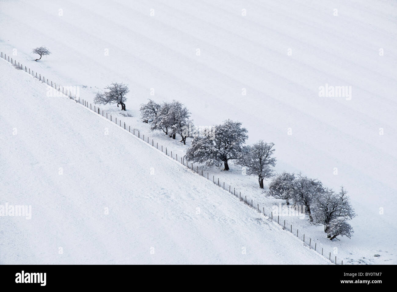 Fenced fields and small trees in snow, Scotland, UK. Showing runrig pattern. - Stock Image