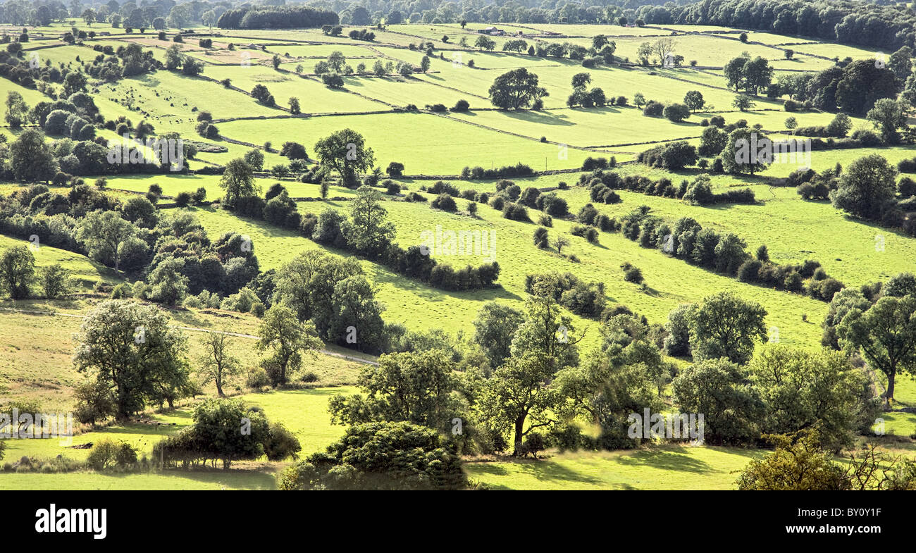 Sunlit landscape of little fields hedges and trees in the Derbyshire Peak District near Bakewell - Stock Image