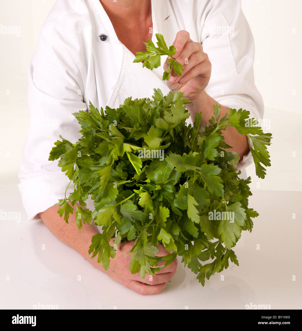 CHEF HOLDING BUNCH OF FRESH PARSLEY - Stock Image
