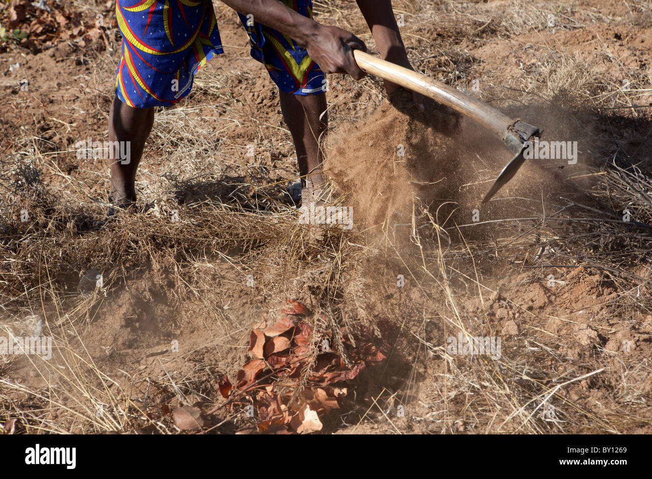 MECEBURI FOREST, NEAR NAMPULA, MOZAMBIQUE, May 2010: Farm labourers working to clear land for planting crops. - Stock Image