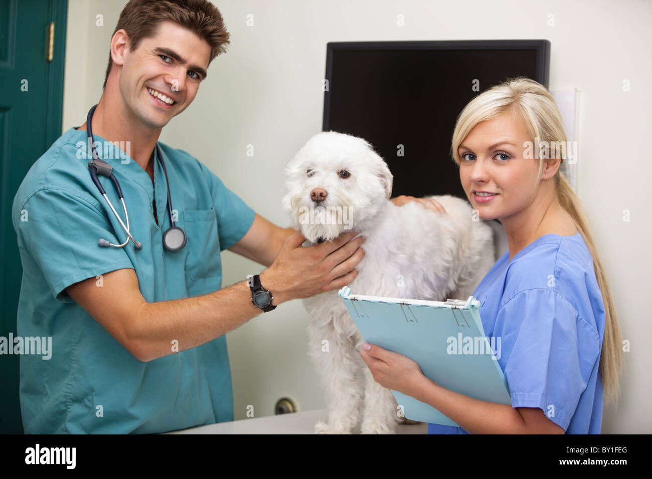 Portrait of vet with assistant examine dog - Stock Image