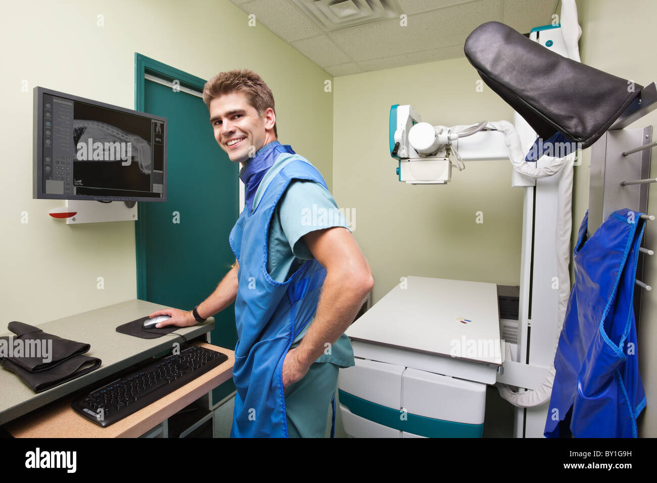 Radiologist examining dog's x-ray in examination room - Stock Image