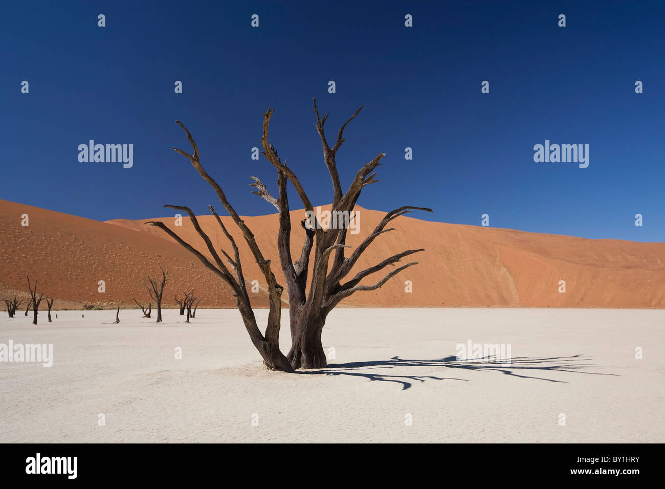 Namibia, Deadvlei. A long-dead tree stands, almost petrified, in the searing heat of Deadvlei. - Stock Image