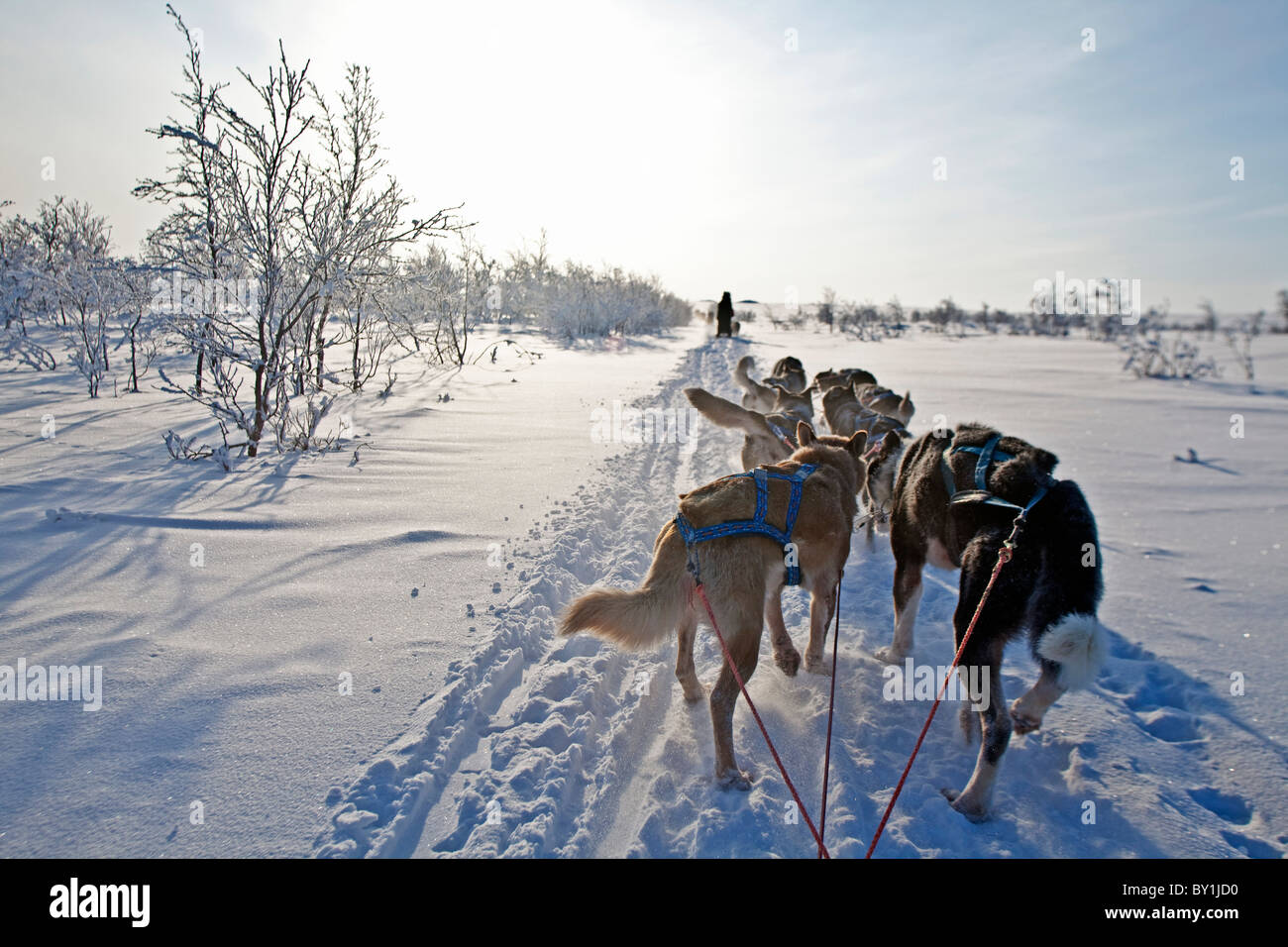 Norway, Finnmark Region. Dog sledding in the Arctic Circle Stock Photo