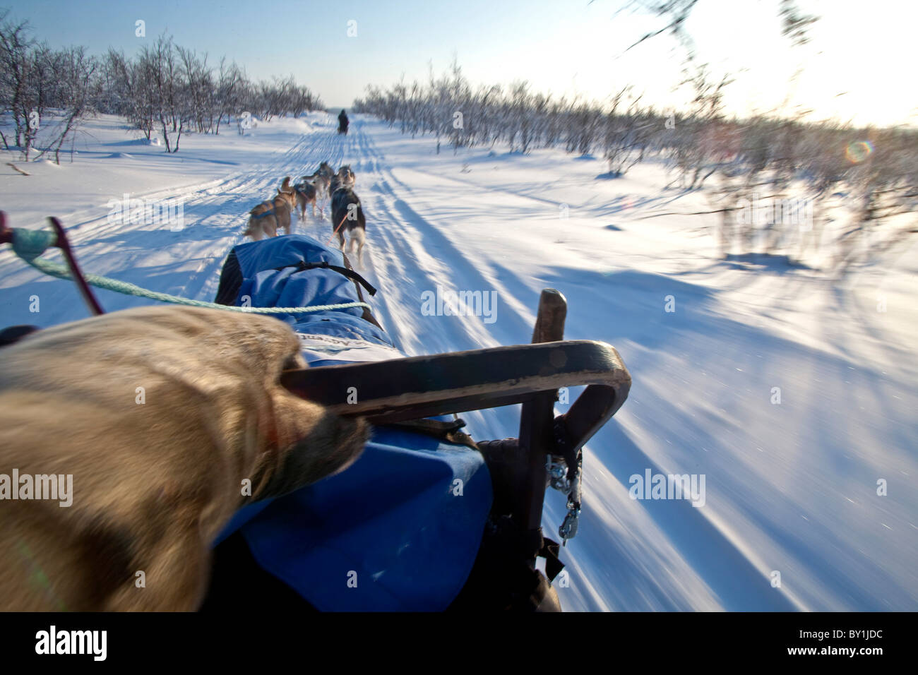 Norway, Finnmark Region. Dog sledding in the Arctic Circle Stock Photo